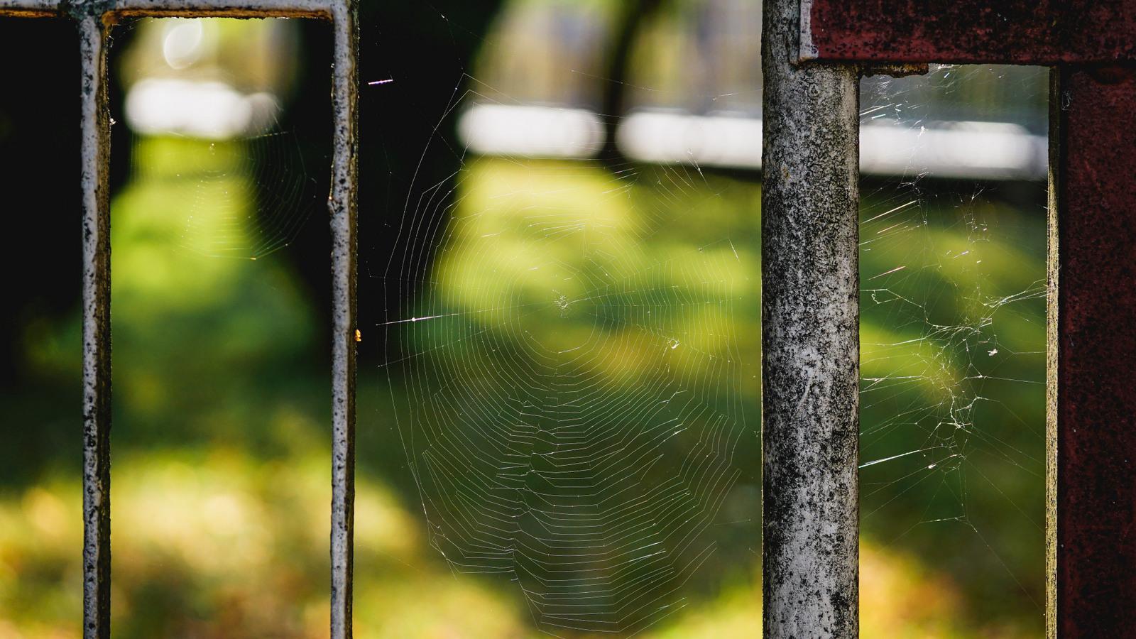 pavučina plot zš na závaží